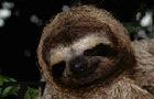 Sloth Music Video