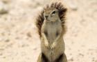[KK]LiveActionSquirrel #4