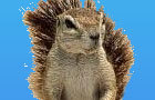 LiveActionSquirrel Finale