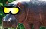 Hippo Dressup!