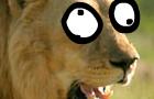 Lion Dressup!