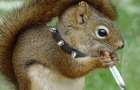 Squirrely Wrath