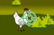 Stop Bird Flu