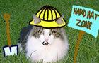 House Flipping Kitties