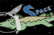 Space Alligator Episode 1