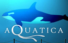 Aquatica by LefflerWebDesign