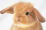 Happy Cutie Bunny Easter!