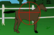 equestrian fun
