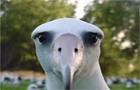 Albatross -- Sbc Style
