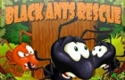Black Ants Rescue by KingDotCom