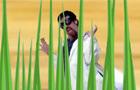 Final Grass