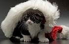 Santa Cat Jigsaw