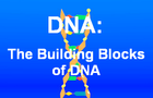 Building Blocks of DNA by playforbrains