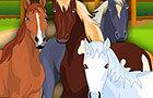 Horse Care Apprenticeship