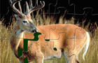 Velvet Whitetail Buck