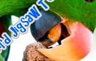 Exotic Bird Jigsaws