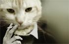 Story Essay Cat