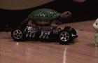 Hamsters: car 2
