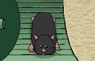 Spud the Hamster