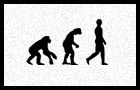 Human evolution