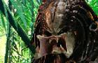Predator effect