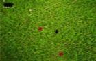 Ant Warz