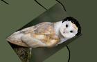 owl and raisan