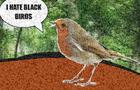 Racist Bird Crapshit