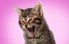 Da Cat Dat Screams!