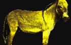 Goodbye Yellow Burro