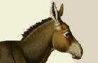 Oops! My Mom's a Mule!