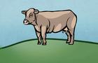 Bovine Bonanza