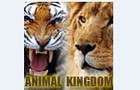 Animals Kingdom