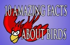 10 Amazing Facts About Birds