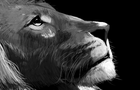 Lion Speedpaint