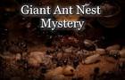 Giant Ant Nest Mystery