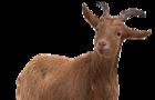 Custom goat creator