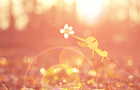 The Amazing World of Pikmin