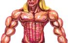 Draw Muscle Tutorial (Cob Secret)