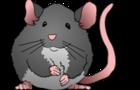 Ratos / Rats