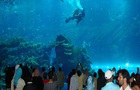 Man Arrested Mating With Fish At Aquarium