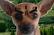 Dog Kombat
