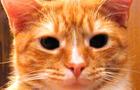 Sherbert the NG Cat