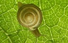 Sugar Rush; Hyper Snail