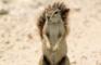 [KK]LiveActionSquirrel #2
