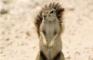 [KK]LiveActionSquirrel #3