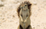[KK]LiveActionSquirrel #6