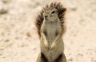 [KK]LiveActionSquirrel #8