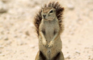 [KK]LiveActionSquirrel#14