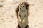 [KK]LiveActionSquirrel#15
